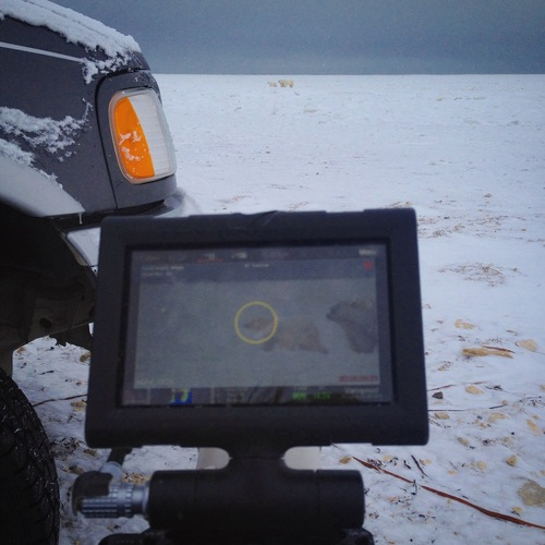 Filming a mother polar bear and her cub in Canada